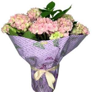 planta-hortensia-rosa