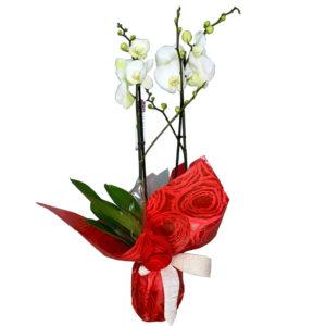 planta-orquidea-blanca-01