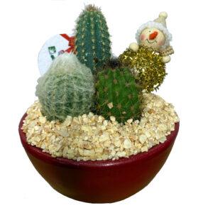 trio de cactus navideño